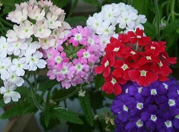 Piante perenni per aiuole fabulous creare giardino for Fiori per giardino perenni